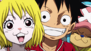 Carrot Luffy and Chopper