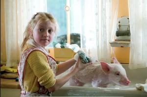 Fern giving Wilbur a bath