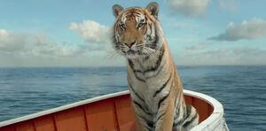 Pi-parker-tiger-11182012-123617.jpg