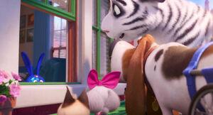 Secretlifeofpets2-animationscreencaps.com-6975