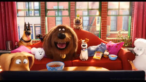 The Secret life of Pets Barcelona vs. Real Sociedad 1