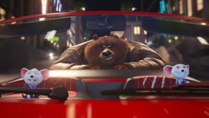 BearOnCar