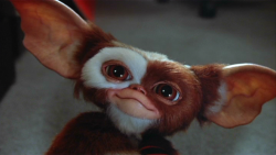 250px-Gizmo.png
