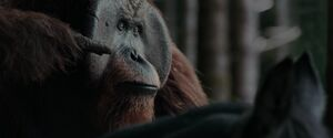War For The Planet Of The Apes 2017 Screenshot 0842
