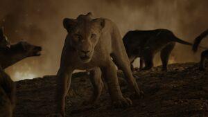 Lion King 2019 Screenshot 2975