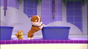 Rubble says bath time