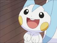 Pachirisu's cute smile