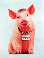 741689-babe-pig