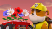 Paw Patrol Rubble was sniffing these flowers