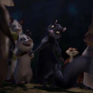 Stella Cat.jpg