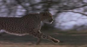 Cheetah1989DVDRip.avi snapshot 00.17.58 2017.02.17 21.59.29.th