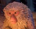 Monkey solemn