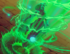 Card Restore.png