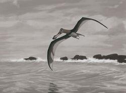 Coloborhynchus piscator, a Late Cretaceous pterosaur.