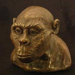 Gracile australopithecine
