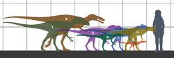 Tyrannosauroidea size 01.jpg
