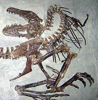 220px-Gorgosaurus death pose