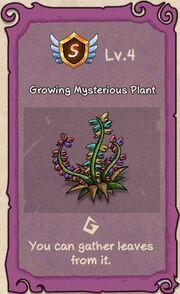 Mysterious Plant 4.JPG