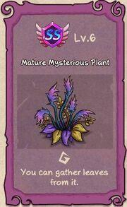 Mysterious Plant 6.JPG