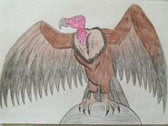 Animal arts lappet faced vulture by eddybite87 dct0h0b