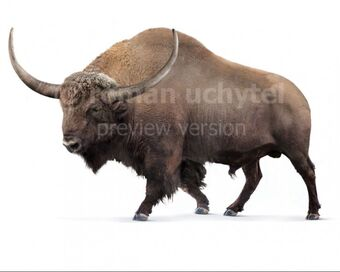 Giant Bison