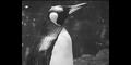 Bronyx Zoo Penguin