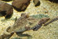 DSC 0068 octopus