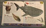 Extreme Animals Dictionary (25)