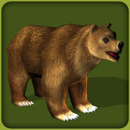 Grizzly Bear (Blue Fang)