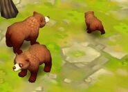 Kodiak-bear-zoo-2-animal-park