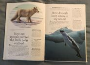 Polar Animals (Over 100 Questions and Answers to Things You Want to Know) (1)
