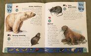 Polar Animals Dictionary (24)