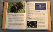 Scholastic Encyclopedia Of Animals (23)