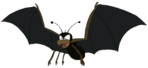 Spider Bat rosemaryhills