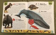 Endangered Animals Dictionary (3)