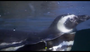 John Ball Zoo Penguin