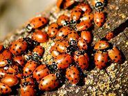 Loveliness of Ladybugs