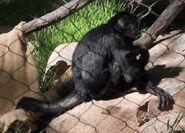 Monkey utah's hogle zoo