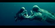 Oceans 2010 Humphead Wrasses
