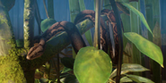 Planet Zoo Boa Constrictor
