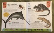 Weird Animals Dictionary (26)