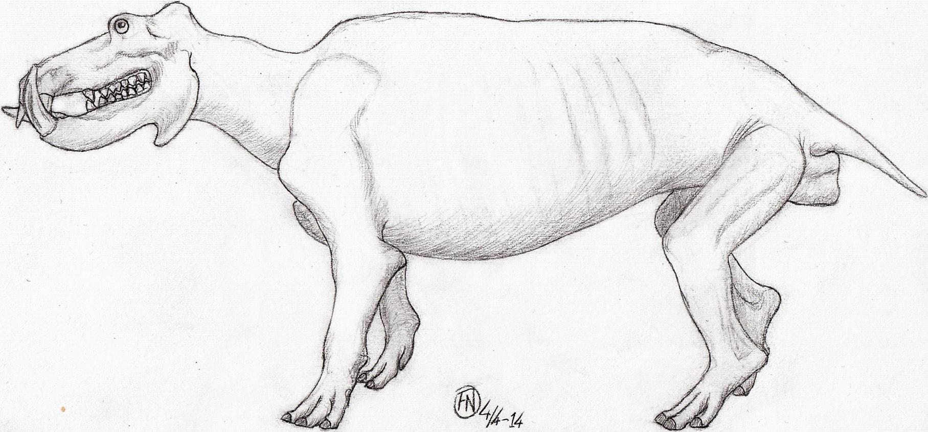 All Todays Hippopotamus