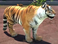Indochinese-tiger-zootycoon3