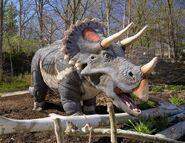 Saint Louis Zoo Triceratops