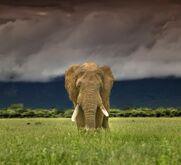 Stormy Elephant