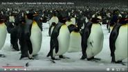 Zoo Clues Penguins