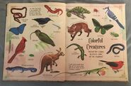 A Curious Collection Of Animals Animals (3)