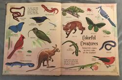 A Curious Collection Of Animals Animals (3).jpeg