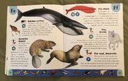 Polar Animals Dictionary (8)