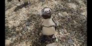 SDZ TV Series Penguin